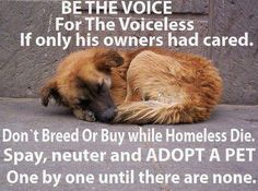 Be the voice for the voiceless. If only the owners had cared. Don't breed or buy while homeless die. Spay, neuter and adopt a pet. One by one until there are none.