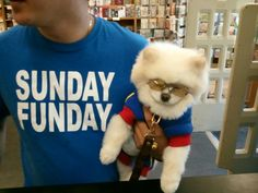 A dog with sunglasses...now I've seen everything!