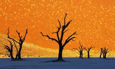 """Deadvlei, Namibia~No, the above images are not surrealist paintings. They're photographs of """"dead valley,"""" where trees stand against a background of the highest sand dunes in the world. Once a thriving forest, the approaching desert has killed all life."""