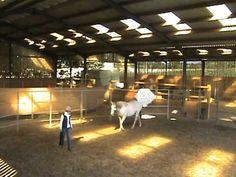 Intelligent Horsemanship, Kelly Marks Gives Leadership Lesson with Horse