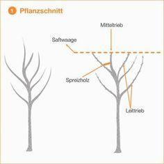 Beliebt Die 694 besten Bilder von Obstbaum schneiden in 2019   Garten KD16