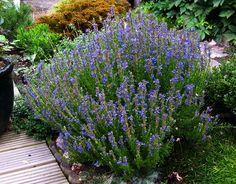 16 plantas de jardín con las que podrás ayudar a que las abejas cumplan su misión