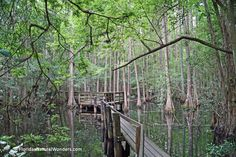 Florida Travel, Travel Memories, Open Up, Highlands, State Parks, Hammock, Kayaking, Cypress Swamp, Trail