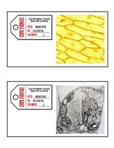CELLS CSI Investigation - Examining Plant and Animal Cells