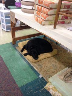 Shop dog working hard Working Hard, Dog, Shopping, Home Decor, Homemade Home Decor, Work Hard, Doggies, Decoration Home, Dogs