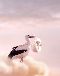 Picture of a stork carrying a baby.