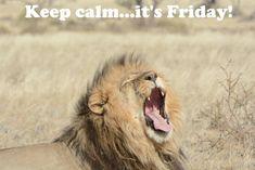 Namibia Safari and Lodges - Gondwana Collection Lodges, Safari, Africa, Tours, Memes, Animals, Image, Cabins, Animales