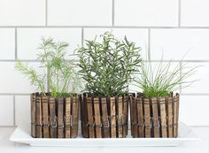 Planters made out of tuna cans with clothespin clips on 'em