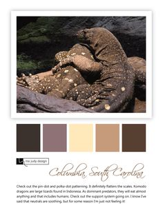 Pin-dots, polka-dots, and not so soothing neutrals!! Wildlife influence - Location: Columbia, South Carolina - mejudydesign.com