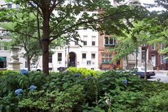 Ethical Society, View from Rittenhouse Square in July