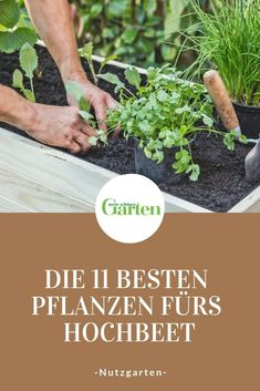 The 11 best plants for raised beds-Die 11 besten Pflanzen fürs Hochbeet Raised beds are particularly suitable for growing delicious vegetables, aromatic herbs and sweet fruits. With these plants you are always right in the raised bed! Plants For Raised Beds, Raised Garden Beds, Garden Types, Garden Care, Outdoor Plants, Outdoor Gardens, Pallets Garden, Plantation, Cool Plants