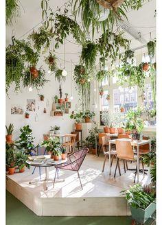 Une boutique aux plantes suspendues
