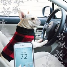 Helping dad save energy while we visit family over the holidays! With our @Honeywell_Home Lyric app, we can control the temperature even on the road! #ad #ConnectYourHome #frenchie