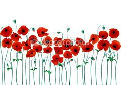 Illustration about Red poppies on a white background vector illustration. Illustration of family, heraldic, flowers - 12779478 Poppy Flower Painting, Poppy Drawing, Flower Art, Art Flowers, Drawing Block, Remembrance Day Art, Photo Libre, Anzac Day, Red Poppies