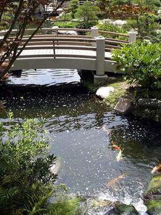 Our garden on pinterest japanese gardens long beach and for Csulb japanese garden koi pond