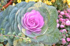 Life, passion and beauty: Pictures: Expozitia de flori, fructe si seminte Romania, Cabbage, Vegetables, Vegetable Recipes, Collard Greens, Veggies, Brussels Sprouts, Cabbages, Sprouts