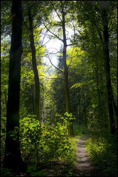 Woodland Walk (Broughton, England) by John Mackaill