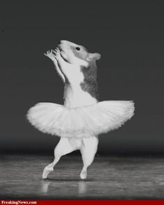 You must have expression in your dancing. See how I point my toe and raise my hands and head to make you feel my dance is coming to an end. Dance Art, Ballet Dance, Hamster Pics, Funny Animals, Cute Animals, Cute Mouse, Cool Pets, Just Dance, Cute Illustration