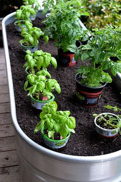 Step by step for container gardening; a smart move since the soil and ground here in the desert can scald roots and seedlings in the hot summer months...