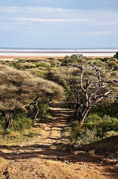 The Road to Lake Manyara . Tanzania