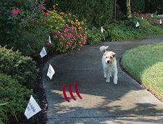 34 Best Pet Fence Images In 2013 Fence Dog Fence