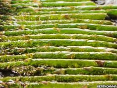 Jamie Oliver, Asparagus, Vegan Recipes, Vegetables, Healthy Food, Food Ideas, Healthy Foods, Studs, Vegane Rezepte