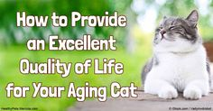 At any age, it's important to feed cats a balanced, antioxidant rich diet. It's also important to keep your older cat in good physical and mental condition.