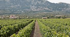 The Hatziemmenouil vineyards. Kos, Wines, Vineyard, Outdoor, Outdoors, Vine Yard, Vineyard Vines, Outdoor Games, The Great Outdoors