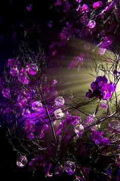 Rays of Light amidst the purple flowers...