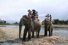 The Corbett national park is another famous destination of North India.