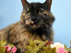 Pet Dogs, Dog Cat, Pets, Adoption Process, Cat Boarding, Animal Welfare, Humane Society, Animal Rescue, Pet Adoption