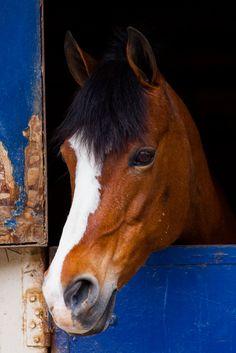 "littlepumpkinsphotography: "" Pony """