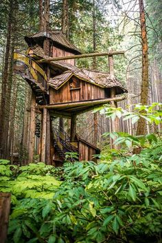 BC's tallest, grandest tree house that rises 50 feet into the forest canopy!