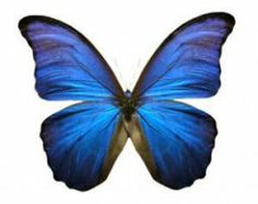 Happy 72nd Birthday butterfly - Google Search