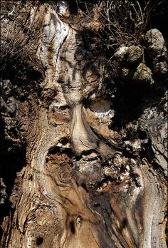 """Really cool """"Tree-face"""""""