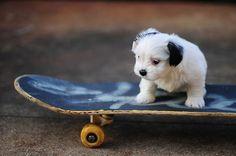 Cute puppy on a skateboard!