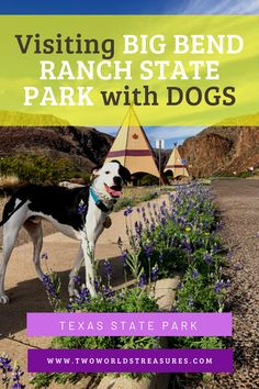 Going to Big Bend region in the far west Texas? Make sure you visit Big Bend Ranch State Park with your dogs when you can hike on the trails with them. Just a few miles away from Big Bend National Park. #bigbendranchstatepark #txstateparks #travelusa