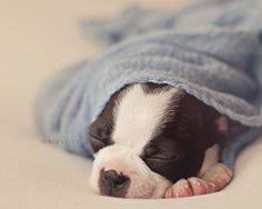 Watch out newborn photography! Puppy photography is moving in!