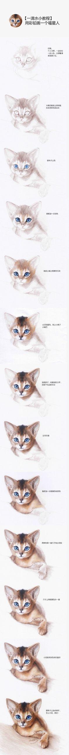 彩铅画猫教程