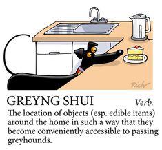 Greyhound humor                                                                                                                                                      More