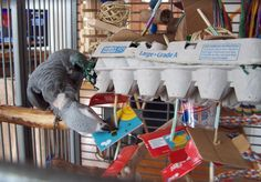 diy parrot foraging toys - Google Search