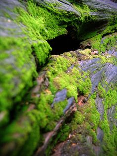 There's nothing quite like the contrast of moss against bark or stone
