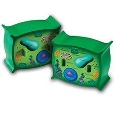 Learning Resources Cross-Section Plant Cell Model Plant Anatomy Science Classroom Accessories 2 Foam Pieces Ages 7 Plant Cell Parts, Plant Cell Model, Parts Of A Plant, Learning Games, Learning Resources, Scientific Skills, Cross Section, Science Kits, Science Fun