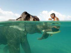 Старый 60-летний слон Раджан играет со своим хозяином на одном из маленьких островов в Бенгальском заливе.