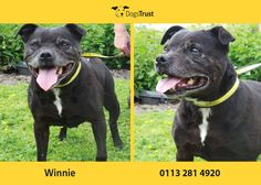 Winnie is an older lady from Dogs Trust Leeds - she is a gorgeous girl who loves everyone!