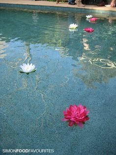 Google Image Result for http://2.bp.blogspot.com/_Qt19NwlJjlg/TB2W3k08LeI/AAAAAAAAM2s/aO9zbM7vgw0/s1600/4370-swimming-pool-lotus-flower-decorations.jpg