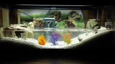 aquarium ideas #crab #aquarium #tank