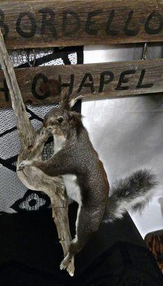 Vintage Tassel-Eared Squirrel Taxidermy Mount by LoveBizarreOddities on Etsy