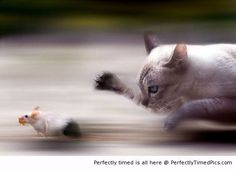 Playing cat and mouse...  Real life Tom & Jerry...  Perfectly timed pic