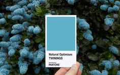 Flowers in bloom. Pantone and Twinings Tea UK partnered to develop a color of 'Natural Optimism' – an airy and weightless blue shade with an undertone of sunny yellow warmth. Pantone Azul, Pantone Colour Palettes, Pantone Color, Colour Pallete, Color Schemes, Desing Inspiration, Design Ideas, Story Inspiration, Cheer You Up